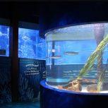 Zoom sur les aquariums de Berlin